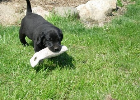 How to Undergo General Behavior Modification with your Dog  General Behavior Puppy