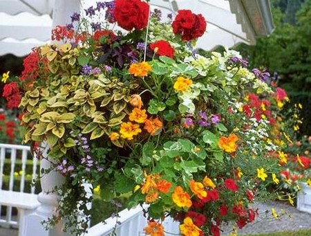 How to Create a Hanging Basket  Hanging Basket