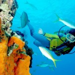 How to Choose a Mask, Fin and Snorkel for Scuba Diving