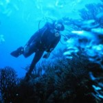 How to Choose Weights and Weightbelts for Scuba Diving