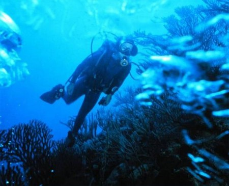 How to Choose Weights and Weightbelts for Scuba Diving  Weightbelts for Scuba Diving