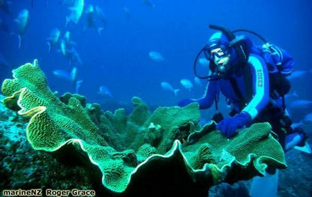 How to Dive in Temperate Waters