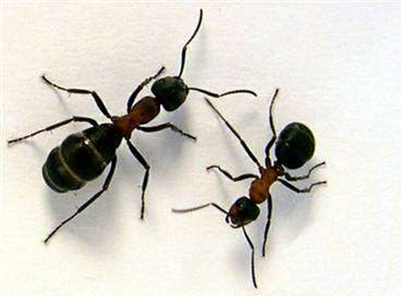 How to Get Rid of Ants Ants