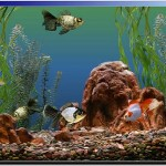 How to Care for the Fly in Your Aquarium