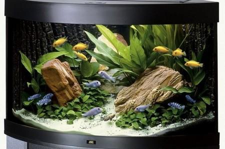 How to Cope with Different Kinds of Aquarium Crisis  Aquarium Crisis