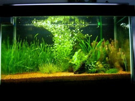 how to choose aquarium substrate