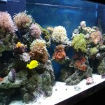 How to Deal with Fungal and Viral Diseases in your Aquarium