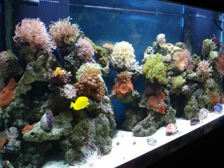 How to deal with fungal and viral diseases in your aquarium for How often should you clean a fish tank