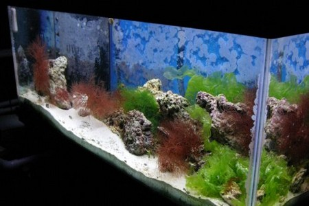 How to Adjust pH in Aquarium Water  Aquarium Water 5