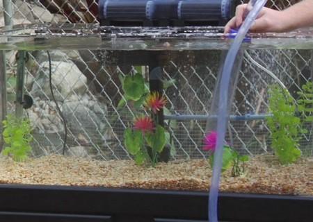 How to Adjust pH in Aquarium Water  Aquarium Water