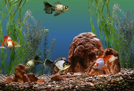 How to Observe Your Aquarium Fish's Health