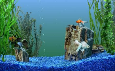 How to Deal with Fungal and Viral Diseases in your Aquarium  Aquarium8
