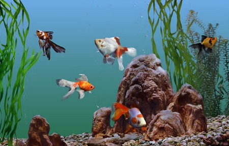 How to Deal with Parasitic Infections in your Aquarium  Aquarium9