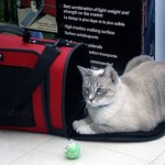 How to Train Your Cat to Sit Comfortably Inside His Cat Carrier