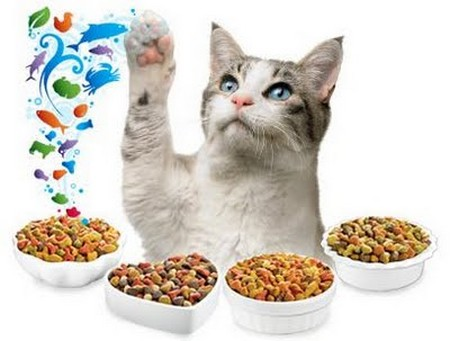 How to Turn Your Cat into a Gourmet  Cat Gourmet