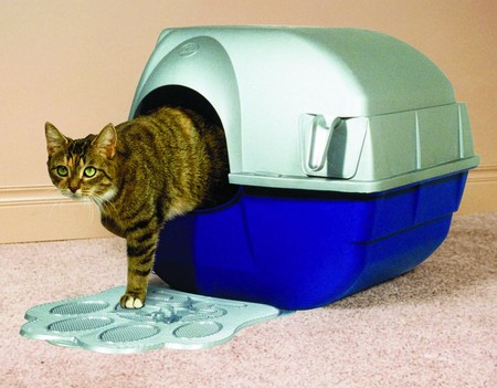 How to Train Your Cat to Use the Litter Tray  Cat Litter Tray