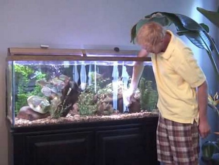 How to Properly Catch a Fish in an Aquarium  Catching fish