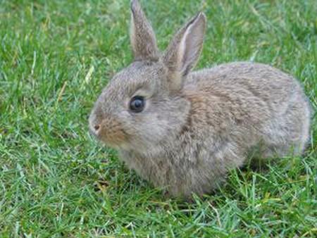 How to Keep Your Dwarf Rabbit Healthy  Dwarf Rabbit Healthy