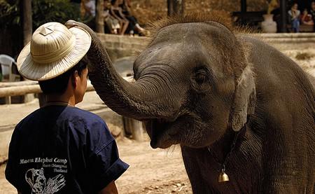 How to Do the Danish Elephant Trick Elephant trick
