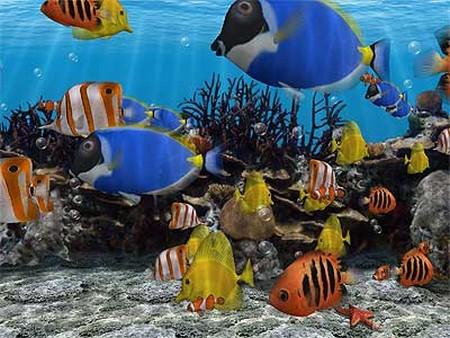 How to Feed Aquarium Fish  Feed Aquarium Fish 5