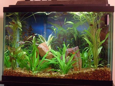 How to Feed Aquarium Fish  Feed Aquarium Fish