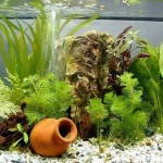 How to Choose Filtration Equipment for an Aquarium