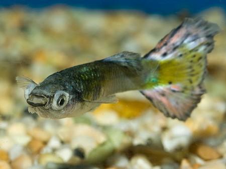 How to Observe Your Aquarium Fish's Health  Fishs Health
