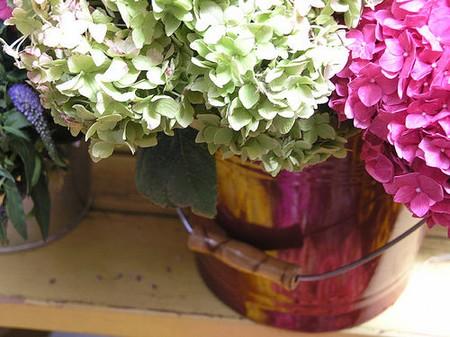 How to Grow Hydrangeas in a Pot Hydrangeas Pot