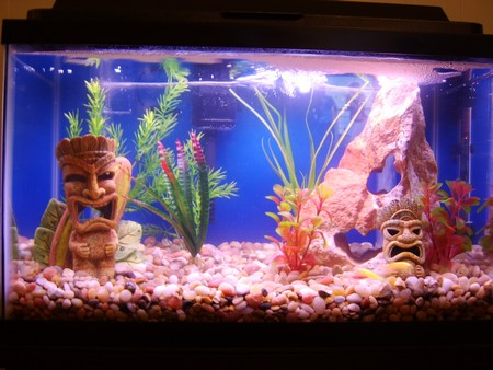 How to prevent new tank syndrome for Nitrite in fish tank