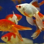 How to Deal with Parasitic Infections in your Aquarium