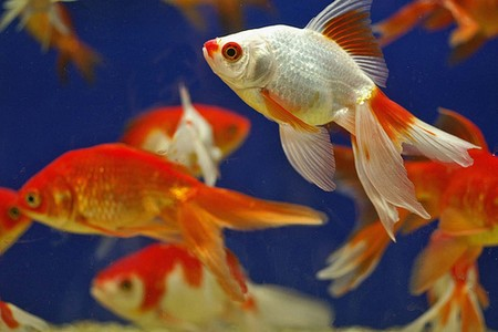 How to Deal with Parasitic Infections in your Aquarium  Parasitic Infections