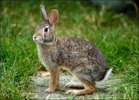 How to Keep Your Dwarf Rabbit Healthy  Rabbit Healthy