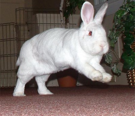 How to Understand Your Rabbit's Behavior  Rabbit's Behavior 5