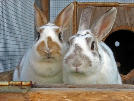 How to Understand Your Rabbit's Behavior  Rabbit's Behavior