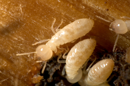 How to Know If You Have Termites termites