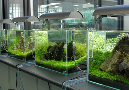 How to Change the Water Safely in an Aquarium Aquarium