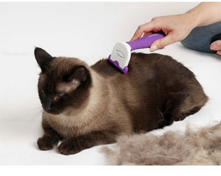 How To Stop Your Cat Shedding Hair
