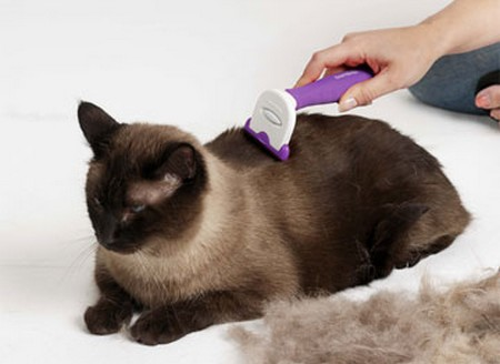 How to Mininise your Cats from Hair Shedding Cats Hair Shedding