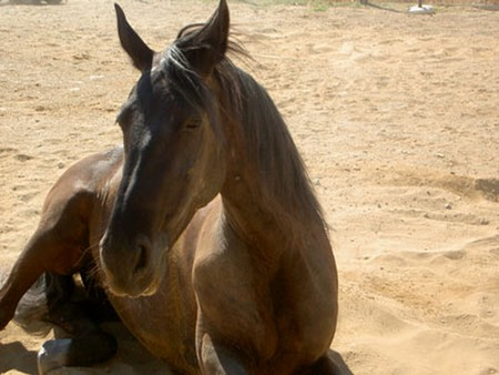 How to Cure Horse Colic Cure Horse Colic