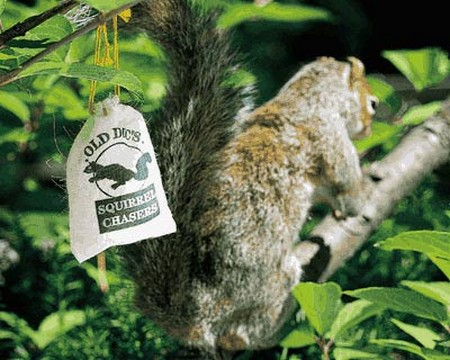 How to Deter Squirrels Deter Squirrels