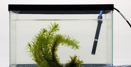 How to Test to Dissolved Oxygen in an Aquarium Dissolved Oxygen Aquarium