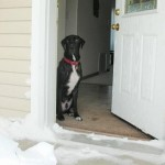 How to Train a Dog to Greet at the Door
