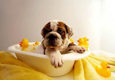 how to prepare a bath