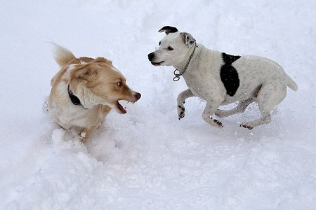 How To Work Out Your Dog In Winter Dogs Playing in Snow