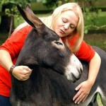 How to Take Care of Donkeys