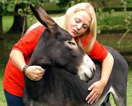 How to Take Care of Donkeys Donkeys