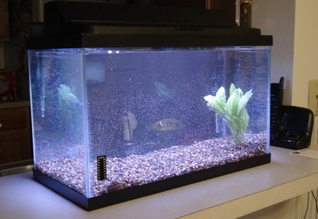 How to Set up a New Fish Tank Heater Fish Tank