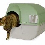 How To Train Your Cat To Use Kitty Litter