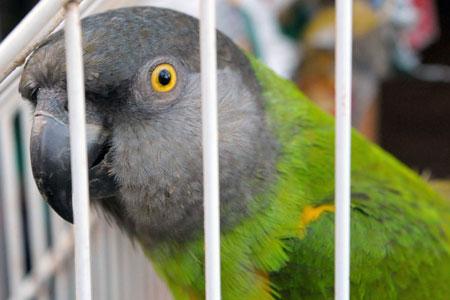 How to Avoid Parrot Boredom Parrot Boredom