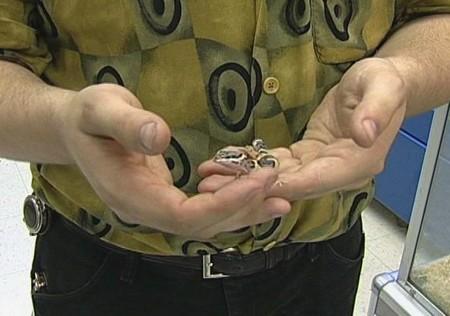 How to Discipline a Pet Lizard Pet Lizard
